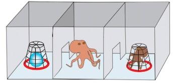 MDMA octopuses