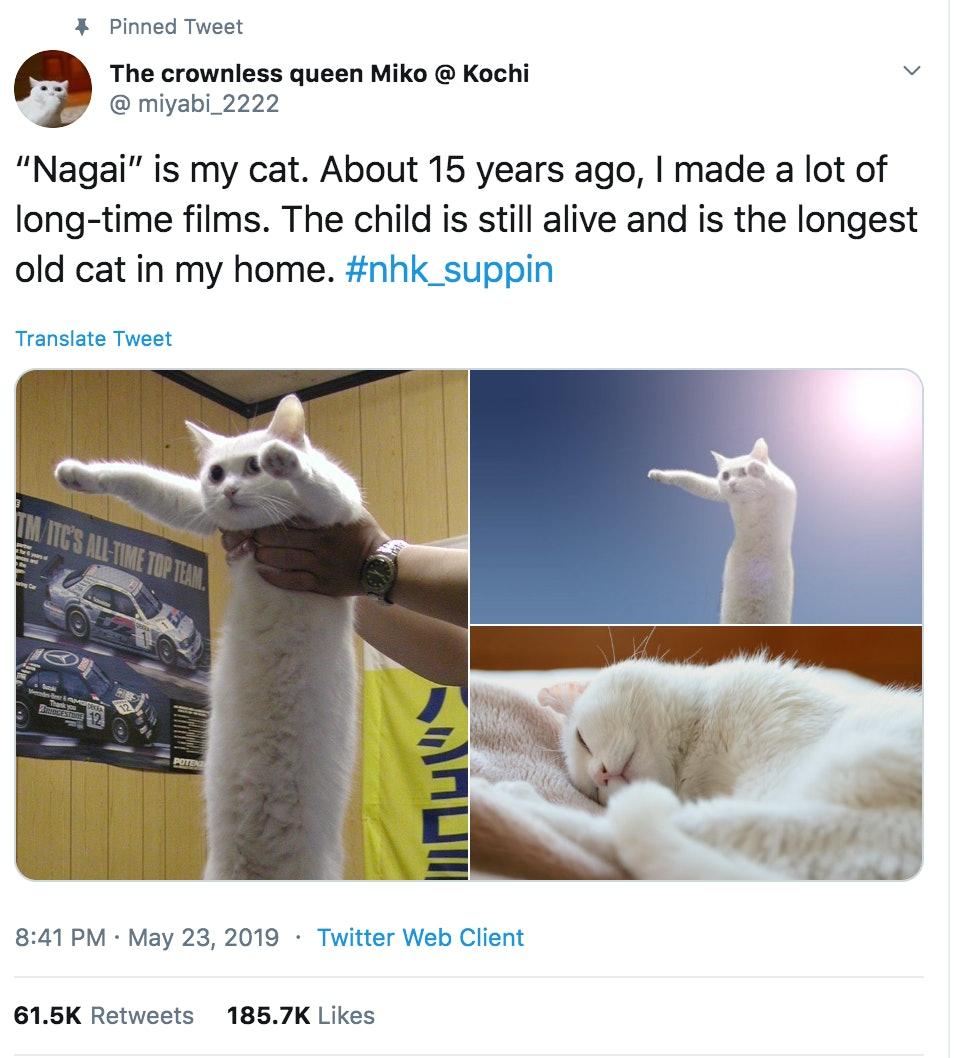 longcat meme gigantamax meowth