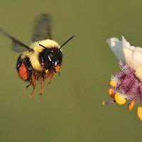 Farms Face Rising Costs and Hard Times as Wild Bees Decline