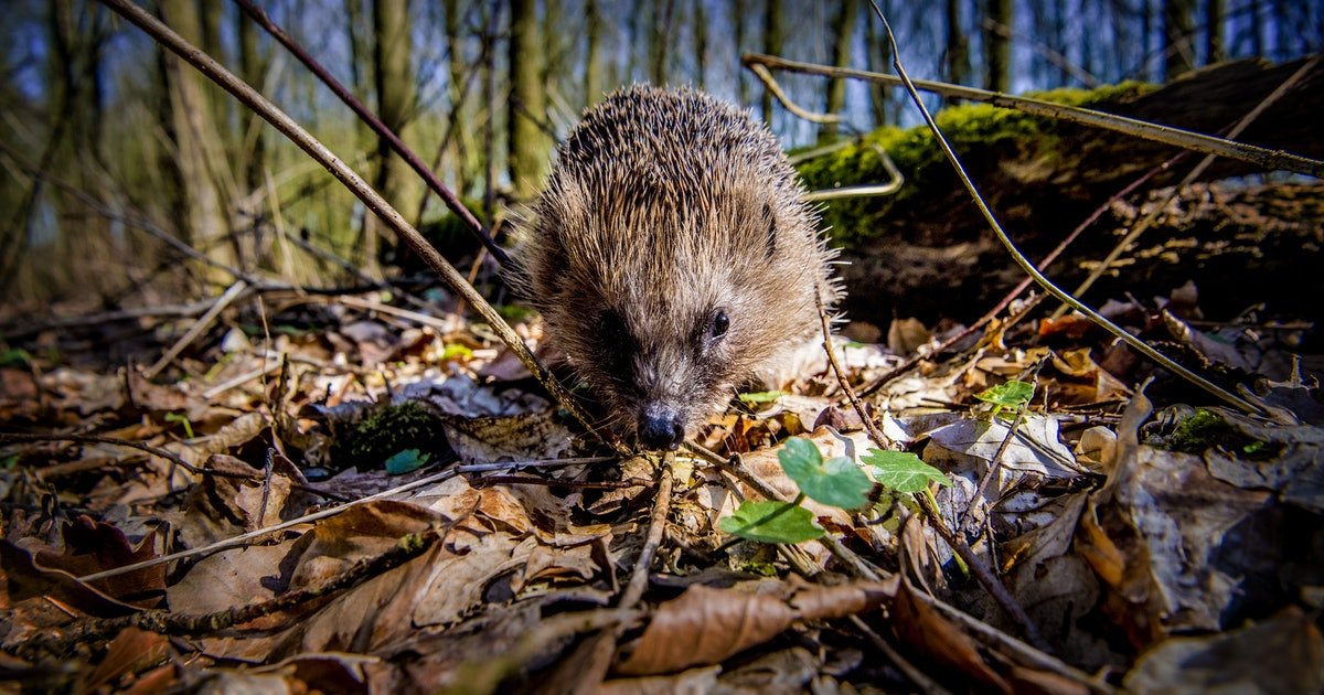 6 venomous mammals that roam, fly and crawl on planet Earth