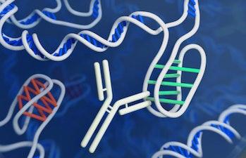 dna genetics I motif