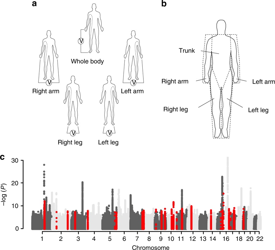 Genome-wide association study of body fat distribution identifies adiposity loci and sex-specific genetic effects.