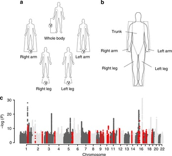 Genome-wide association study of body fat distribution identifies adiposity loci and sex-specific ge...