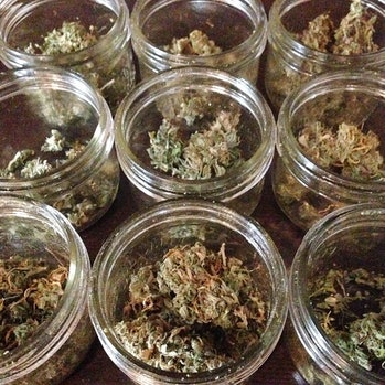 terpene terpenoid oil trichome weed pot marijuana kush jazz cabbage devil's lettuce cannabis