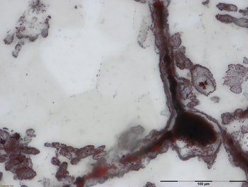 Haematite filament attached to a clump of iron in the lower right, from hydrothermal vent deposits in the Nuvvuagittuq Supracrustal Belt in Québec, Canada. These clumps of iron and filaments were microbial cells and are similar to modern microbes found in vent environments.Photo by M.Dodd.