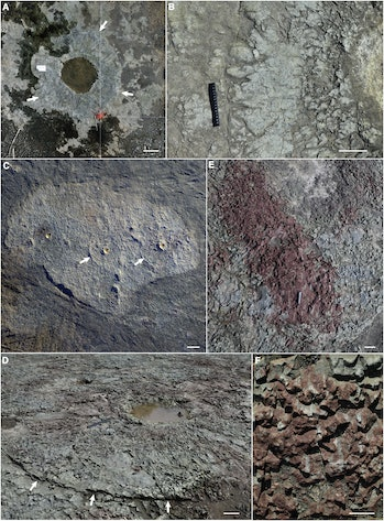 These images show signs of the trees that once stood in this early forest in Cairo, New York.