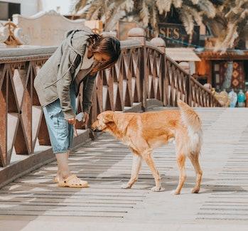 dog-human relationship