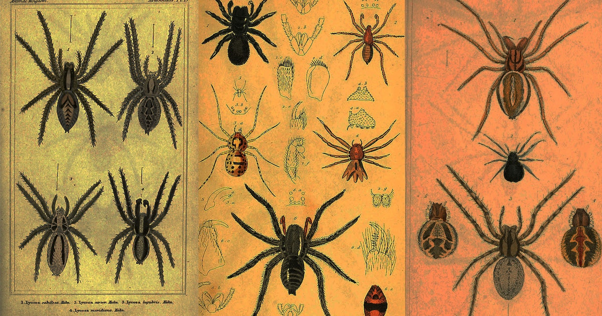 Spiders Can Now Fly, Terrifying New Study Shows