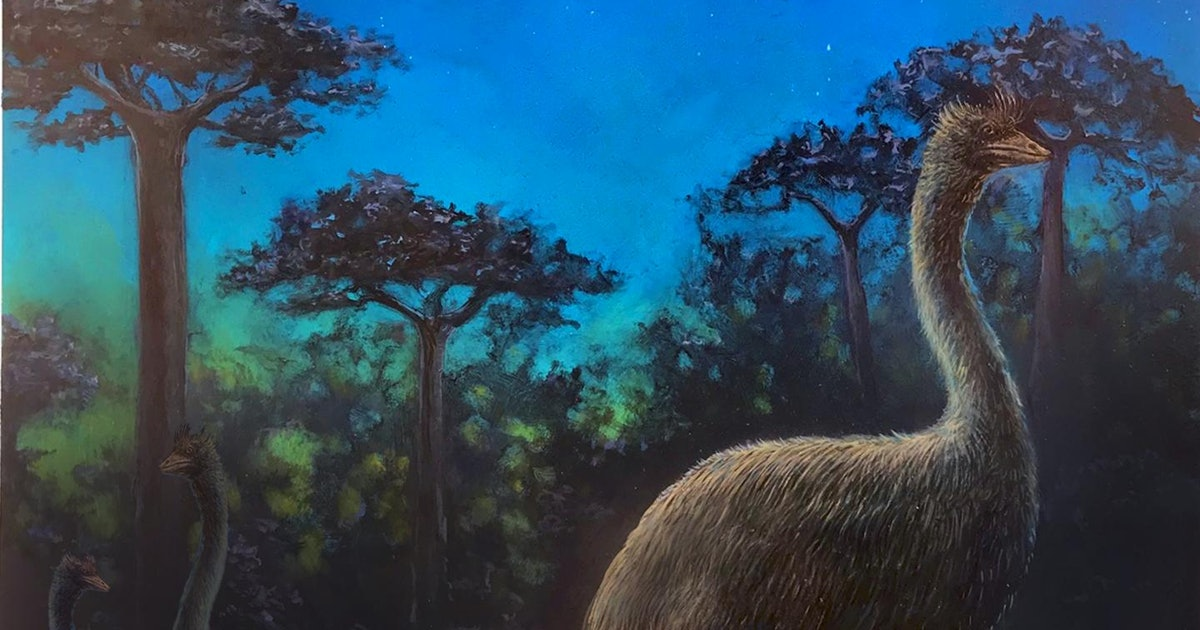 """Study of Ancient """"Elephant Bird"""" Brain Reveals Clues About Old Madagascar"""