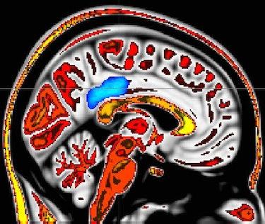 posterior cingulate cortex mindfulness