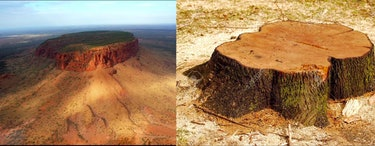 The Flat Earth had No Forests theory says that flat top mountains are the stumps of ancient trees.