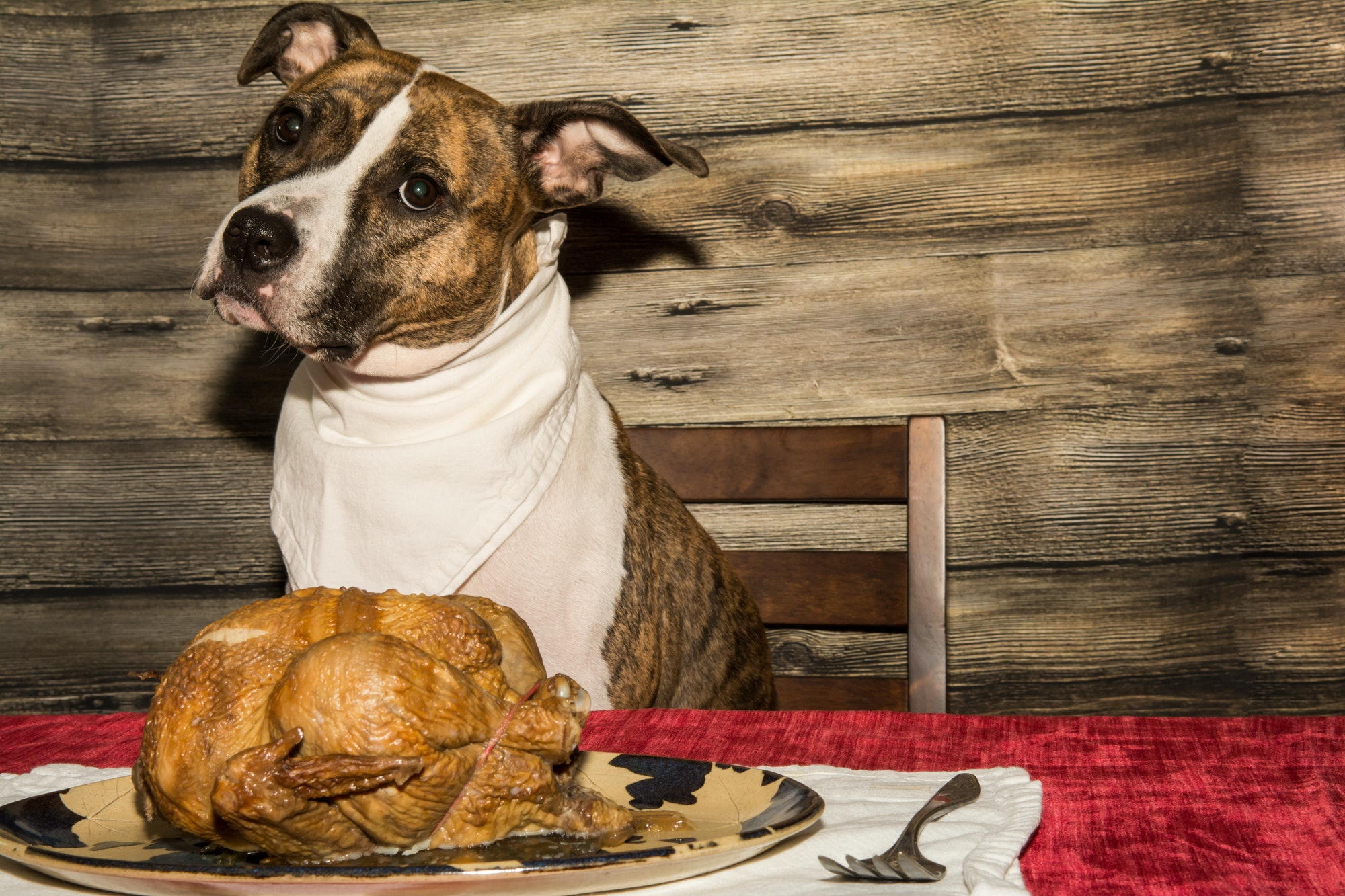 dog with cooked turkey