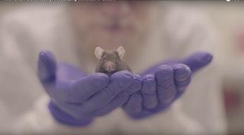 Allen Brain Institute Observatory Mouse