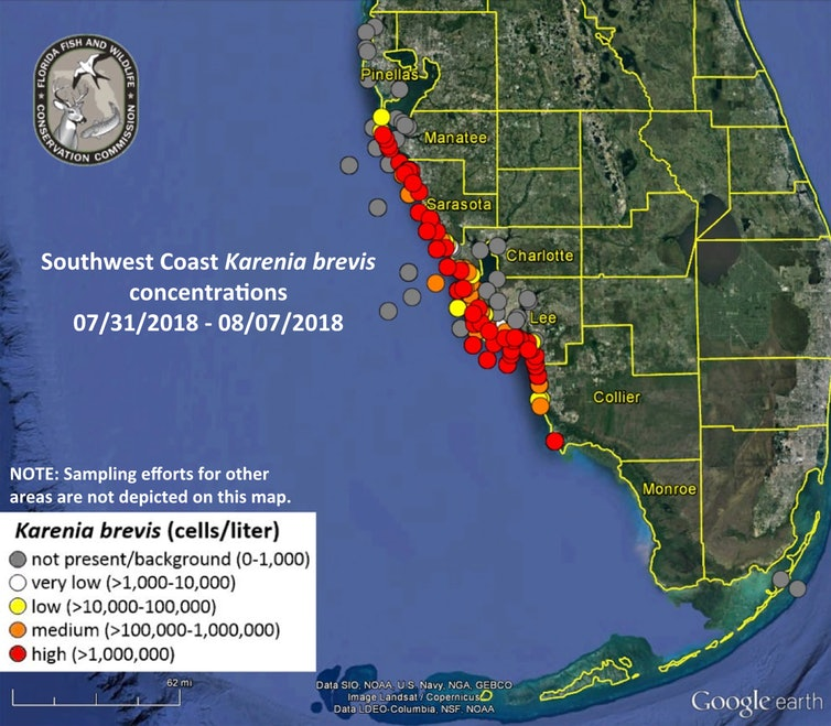 Florida's red tide outbreak as of Aug. 8, 2018.