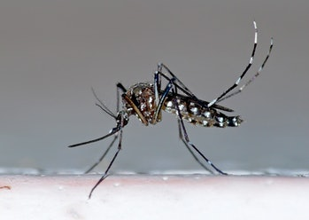 Research on electronic mosquito repellers suggest they're not very effective. Maybe they should play dubstep, instead.