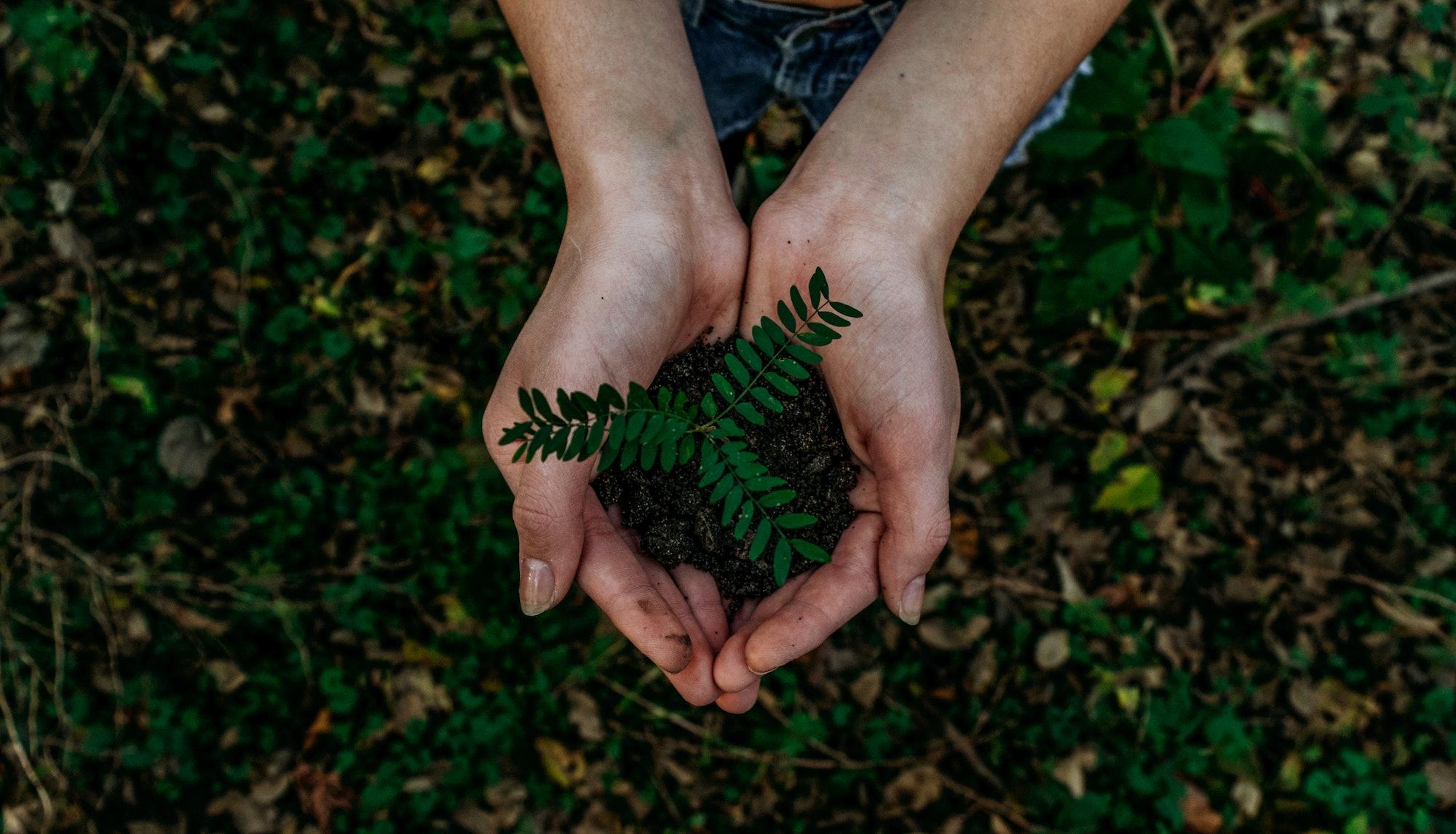 dirt hands plant
