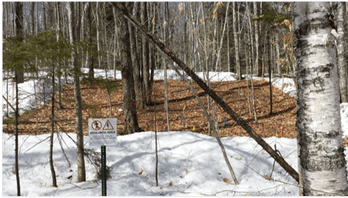 Research plot at Hubbard Brook Experimental Forest with snowpack experimentally reduced.