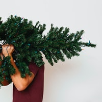 Is it time to give up on real Christmas trees?
