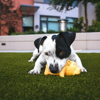 12 Pet Products on Amazon You Didn't Know You Needed