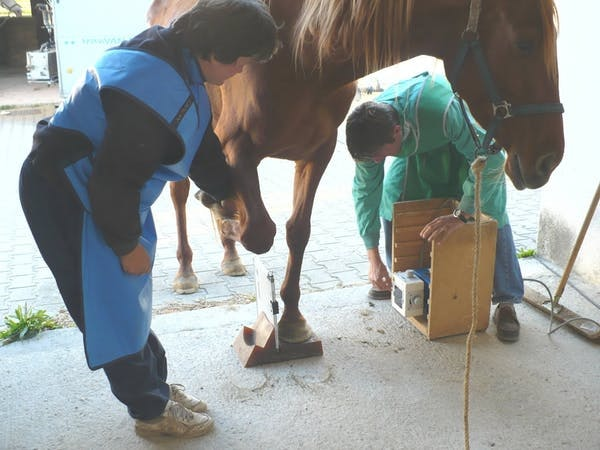 A veterinarian evaluates lameness in a horse's lower limb.