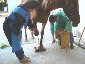 A veterinarian evaluates lameness in a horse's lower limb.