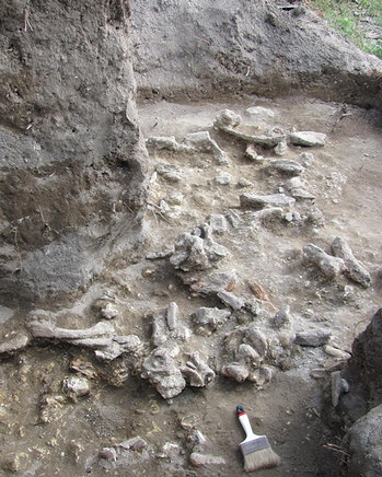 The excavations at Ngandong.