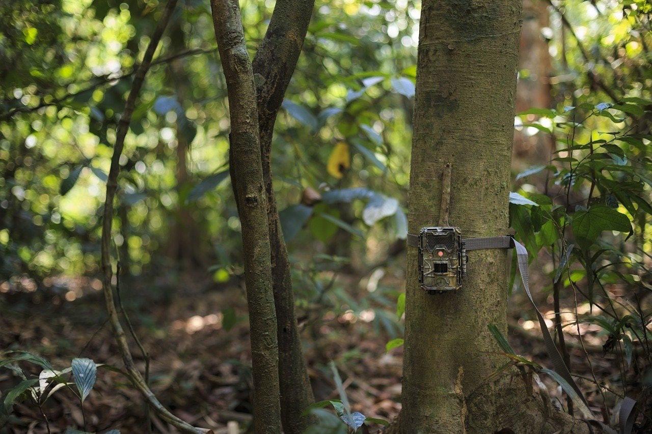 camera trap