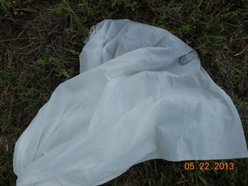 Some of the small pigs were placed in plastic bags.