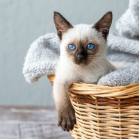 Keeping cats indoors: How to ensure your cat is happy, according to science