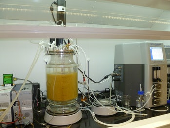 food waste hydrogen