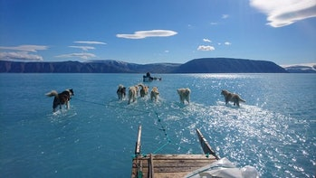 dog expedition Greenland