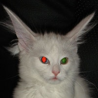 Why Cat Eyes Look Evil at Night, According to Science
