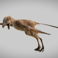 Evolution of Flight: Before Birds, There Were Small, Bat-Like Dinosaurs