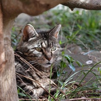 Google's Cats Grew Up to Be Alleged Killers