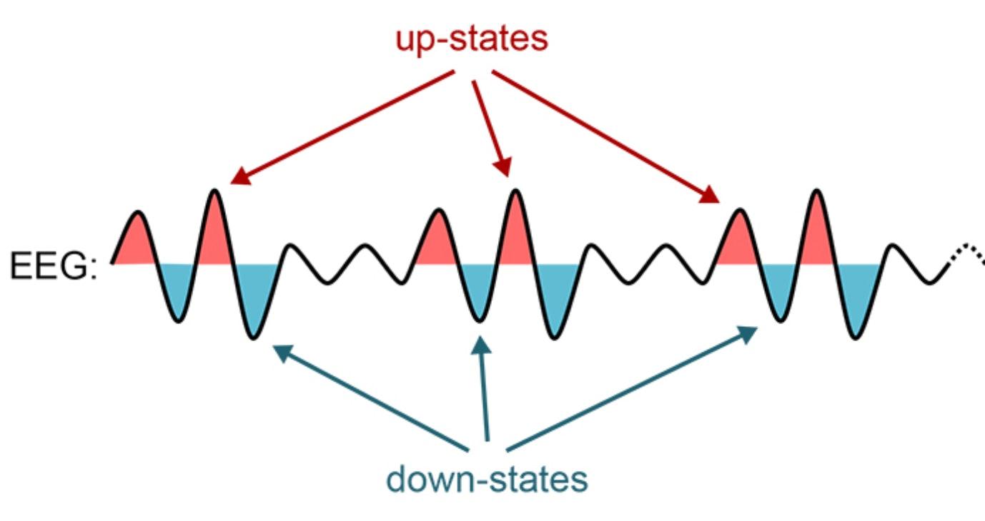 brain states sleep learning