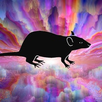 Rats on DMT hint at the benefits of psychedelic microdosing