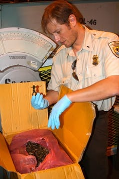 An inspector from the US Fish and Wildlife Service checks a dried frog shipment.