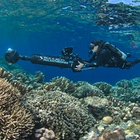 How Artificial Intelligence and 360-Cameras Are Helping to Save Coral Reefs