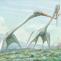 Pterosaurs Are Changing What We Know About Flight