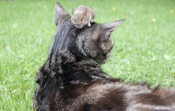 cat, mouse