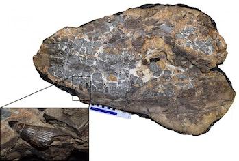 ancient crocodiles melksham monster
