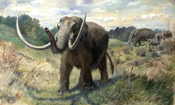 First Floridians and Last Mastodons The Page-Ladson Site in the Aucilla River