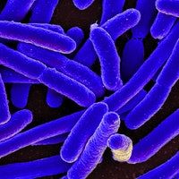 NASA Is Sending E. Coli Bacteria Strains to the International Space Station