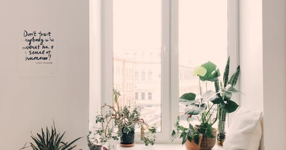 NASA Says These Houseplants Will Purify the Air in Your House