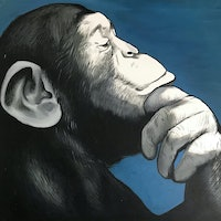 Scientists may have answered a decades-old question about ape intelligence