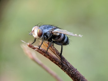 Fruit flies reacted badly to prolonged exposure to blue light, but that doesn't necessarily mean humans will.