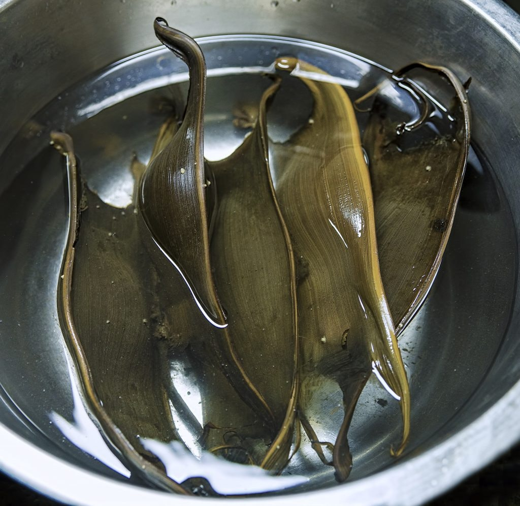 Researchers collected four egg cases to confirm the species.