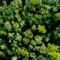 Tree replanting efforts could do less than we hope