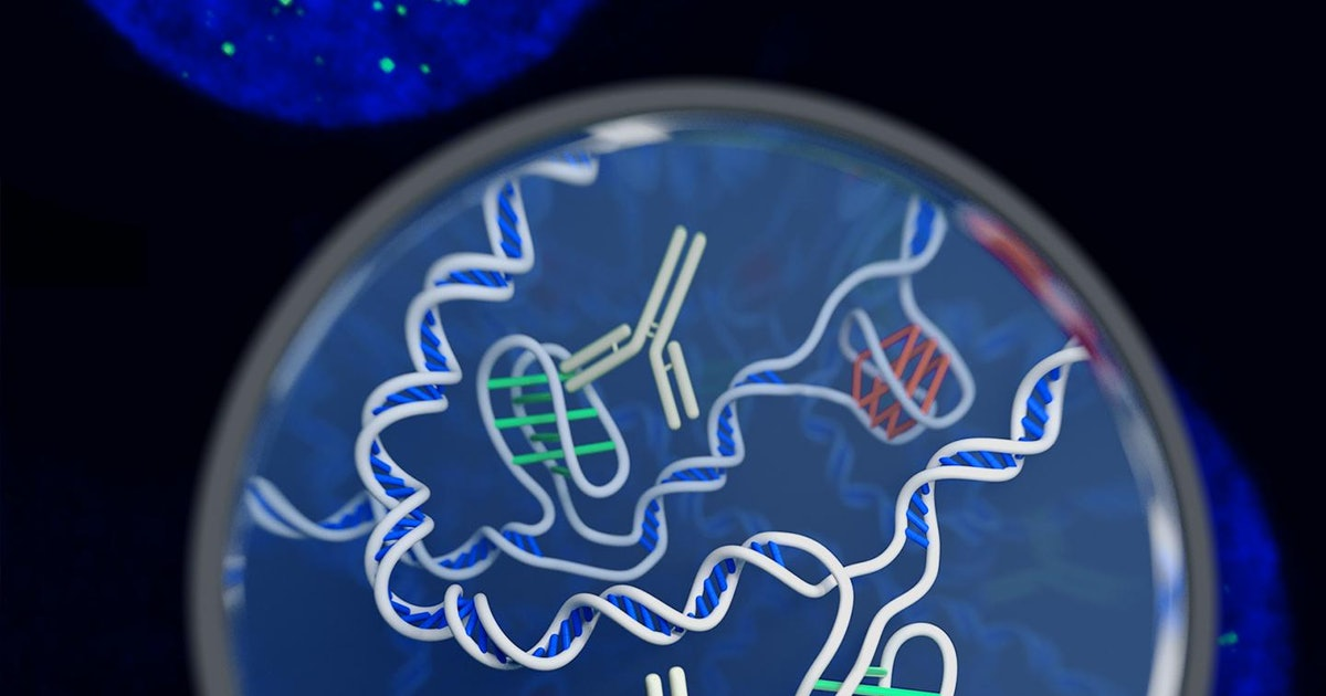 """New DNA Shape Called """"I-Motif"""" Reveals the Double Helix Is Not Alone"""