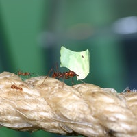 What humans can learn from ants to solve a growing public health problem